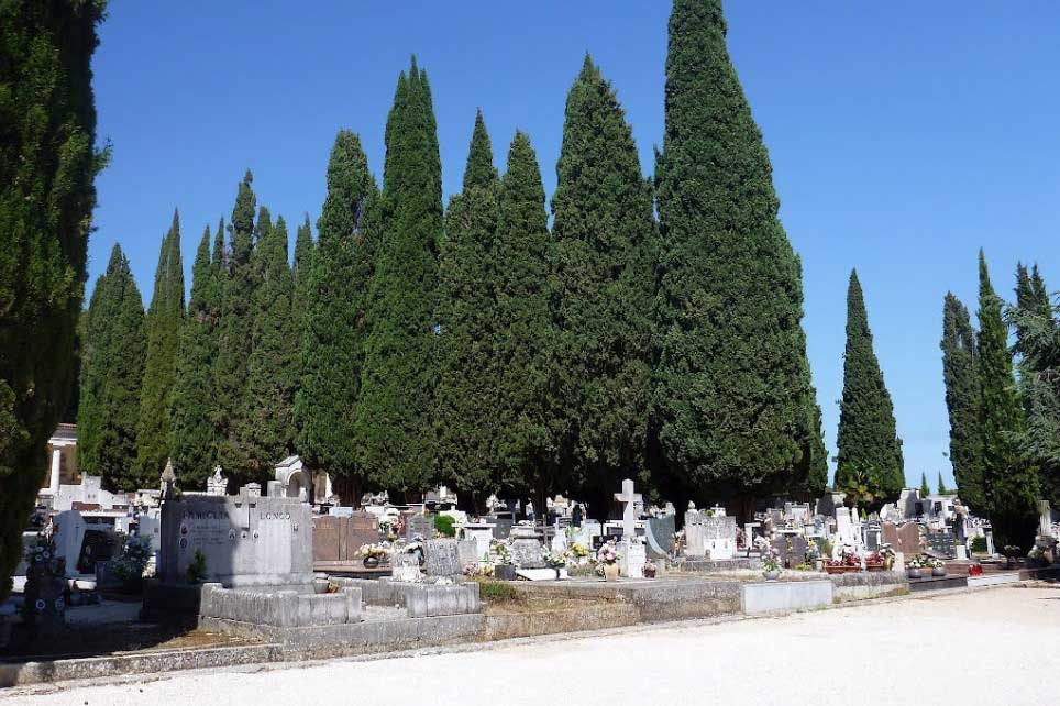 Rovinj-Croatia-Cemetery-Cypresses