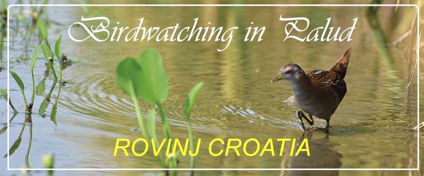 birdwatching_palud_rovinj_croatia